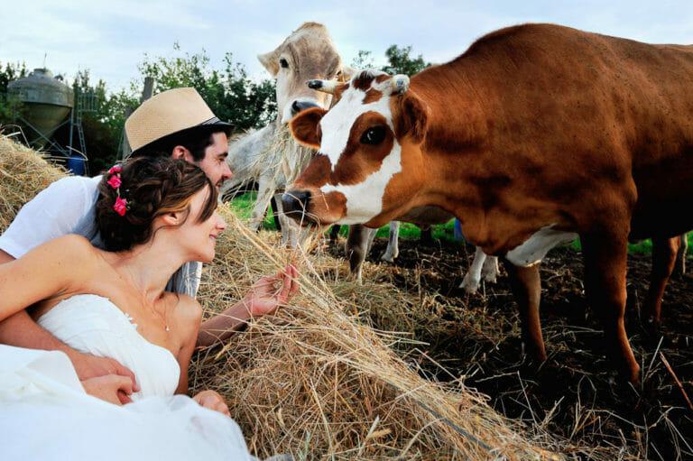Les animaux dans le Mariage